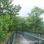 Vom Regen nasse Fußbodendielen des Baumwipfelpfades