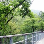 Geländer vom Baumwipfelpfad in Bad Harzburg unter Baumkronen