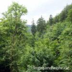 Blick auf Baumgipfel vom Baumwipfelpfad in Bad Harzburg aus gesehen