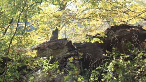 Hasbruch und Hambacher Forst: Geschenke der Natur