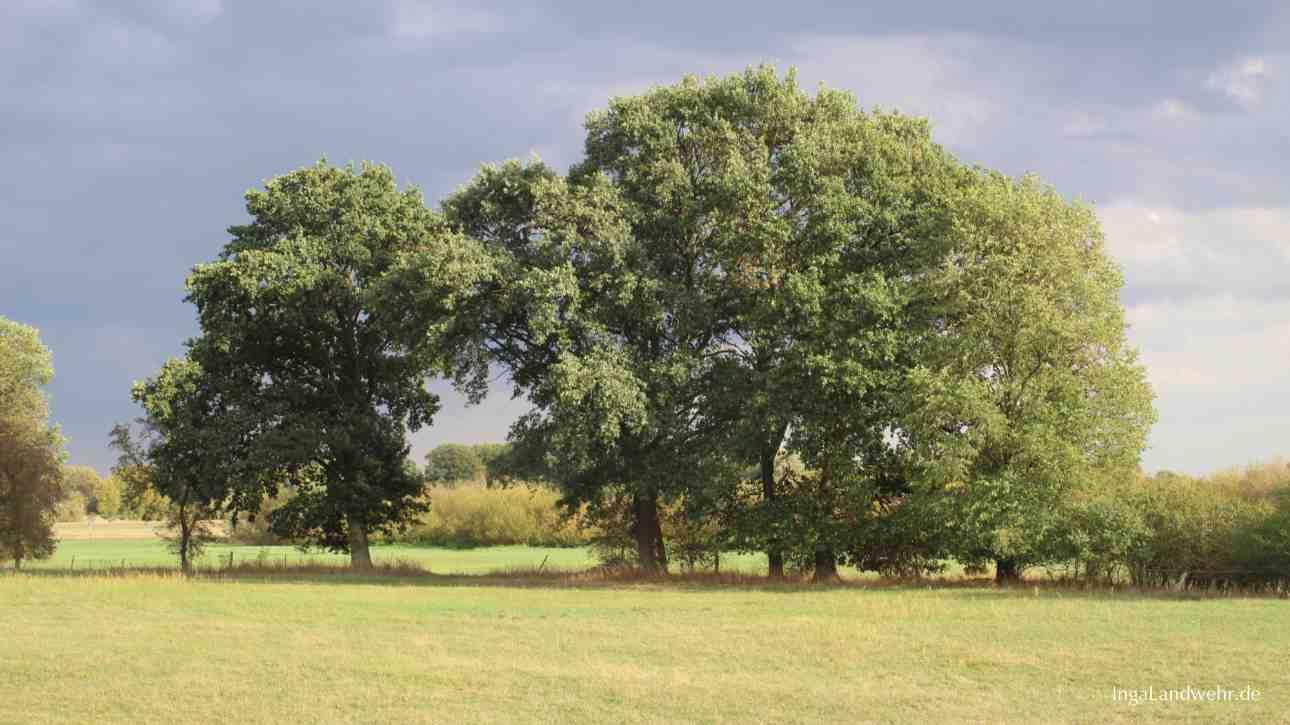 Zwei Bäume auf einer Wiese