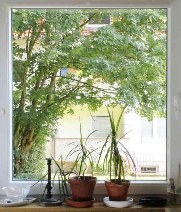 Küchenfenster mit Pflanzen ohne Scheibengardine